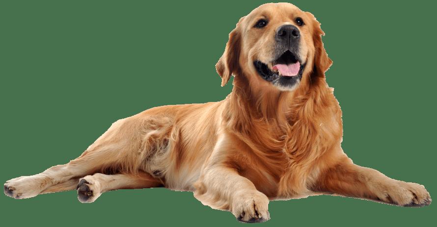 Place zabaw dla psów z przeszkodami